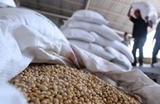 Indonesia có thể bãi bỏ thuế nhập khẩu đậu tương