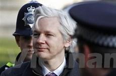 Putin: Vụ Assange có thể mang động cơ chính trị