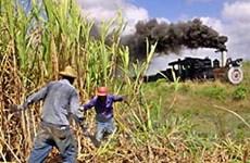 Kinh tế Cuba tăng trưởng khả quan trong năm 2012