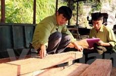 Lào Cai: Truy bắt hai đối tượng vận chuyển gỗ quý