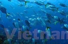 LHQ kêu gọi đầu tư thân thiện với các đại dương