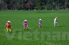 Đề nghị hỗ trợ các tỉnh ĐBSCL sản xuất vụ Đông Xuân