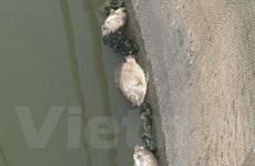 Nhiều sông, suối ở Đồng Nai đang bị ô nhiễm nặng