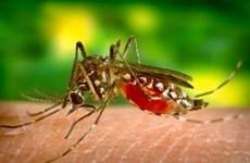 Hy Lạp phát hiện ca nhiễm virus Tây sông Nile mới