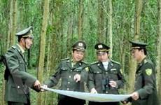 """Quản lý đất rừng: Nên giao trực tiếp thay vì """"khoán"""""""