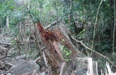 Đồng quản lý rừng đặc dụng: Nhiều vướng mắc cơ chế