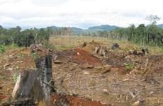 """Chuyển đổi rừng nghèo: Cái cớ """"xẻ thịt"""" rừng giàu"""