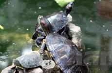 Cam go cuộc chiến chống sinh vật ngoại lai xâm hại
