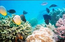 Quy hoạch hệ thống khu bảo tồn biển Việt Nam