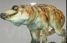 Cá sấu từng là món khoái khẩu của người tiền sử