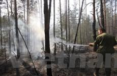 Nga: Cháy rừng gây đe dọa về phóng xạ hạt nhân