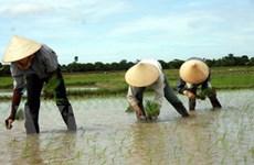 15 tỉnh được hỗ trợ giống cây trồng sau thiên tai
