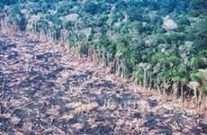 Kinh tế thiệt hại nặng nề vì mất đa dạng sinh học