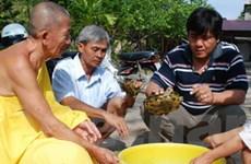 Phát hiện thêm 3 hộ dân nuôi rùa tai đỏ ở Bạc Liêu