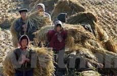 LHQ định viện trợ Triều Tiên 300.000 tấn ngũ cốc