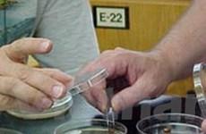 Trung Quốc nghiên cứu điều chế kháng sinh mới