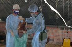 Phú Thọ: Nhiều gia cầm chết không rõ nguyên nhân