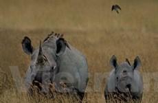VN và Nam Phi hợp tác bảo vệ động vật hoang dã