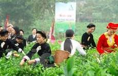 Liên hoan Trà quốc tế hứa hẹn nhiều nét đặc sắc