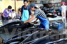 Lập liên doanh với Nhật chế biến, xuất khẩu cá ngừ
