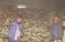 Ấn Độ thu giữ gỗ trầm hương lậu trị giá 12 triệu USD