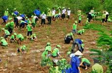 Bình Định đầu tư hơn 23,3 tỷ trồng rừng ngập mặn