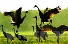 Du lịch sinh thái ở Đồng Tháp ngày càng hấp dẫn