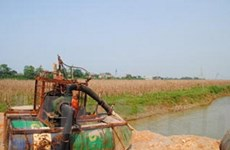 Phú Thọ chấn chỉnh nạn khai thác cát trên sông Lô