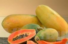 Khám phá những công dụng kỳ diệu từ trái đu đủ