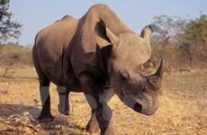 Cấm xuất-nhập khẩu, mua bán 3 động vật hoang dã
