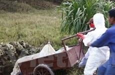 Quảng Nam công bố dịch lợn tai xanh trên địa bàn