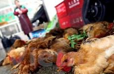 Trung Quốc xác nhận thêm 2 trường hợp nhiễm H7N9