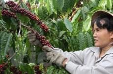 Việt Nam xả hàng càphê, giá trên thế giới giảm mạnh
