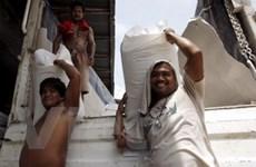 Philippines dự kiến sẽ nhập khẩu 100.000 tấn gạo