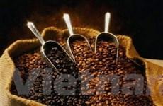 Giá cà phê Arabica giảm do dự báo sản lượng tăng