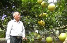Người ươm cây quý cho vườn cây bên Lăng Bác