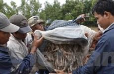 Nuôi tôm sú lấp vụ trở lại ở Trà Vinh: Nhiều nỗi lo