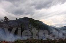 Hàng chục ha rừng trồng ở Đà Nẵng bị lửa thiêu rụi
