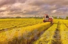 Giá lương thực tăng tác động nặng đến kinh tế