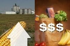 """Thị trường lương thực đi qua một năm khá """"nóng"""""""