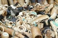 Cảnh sát Gabon tịch thu gần 200kg ngà voi buôn lậu