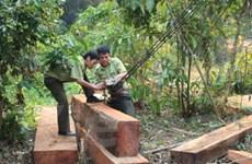Quảng Trị thu hơn 7 mét khối gỗ khai thác trái phép