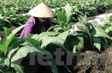 Dùng rong chống hạn và tăng năng suất cây trồng