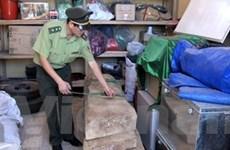 Xác định nơi cây sưa bị đốn hạ ở Phong Nha-Kẻ Bàng