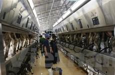 Xây trang trại bò sữa công nghệ cao ở Bình Dương