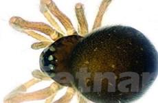 Phát hiện hai loài nhện siêu nhỏ tại Trung Quốc