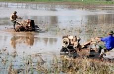 Miền Bắc triển khai gieo cấy hơn 140.000ha vụ mùa