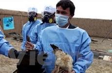 Campuchia ghi nhận ca nhiễm cúm gia cầm thứ 14