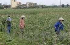 """Bảo hiểm nông nghiệp: Vượt khó khăn để """"về đích"""""""