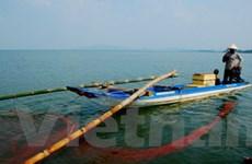 Báo động tình trạng tận diệt thủy sản ở Bình Thuận